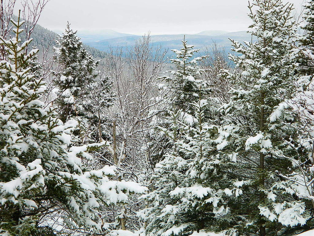 Snow covered trees looking towards Vermont