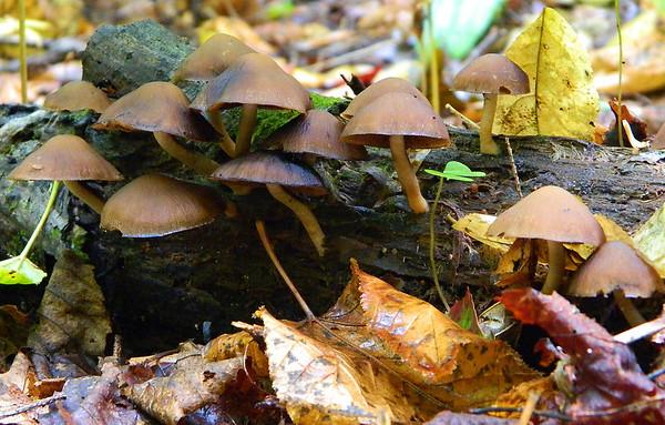 Lots of mushrooms in the woods