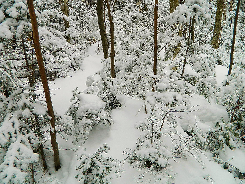 Looking down below at the pretty snow covered trees.